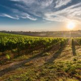 tuscany-grape-field-nature-51947-large